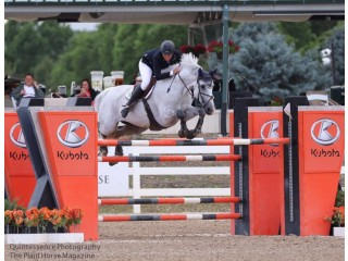 Superior Jumper Horses for Sale, Types of Horse Jumps