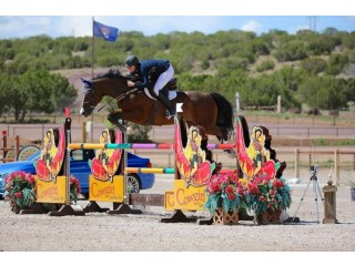 Show Jumping Barns in Texas USA | Best Horses For Hunter Jumper in Dallas | Comly Sports Horses
