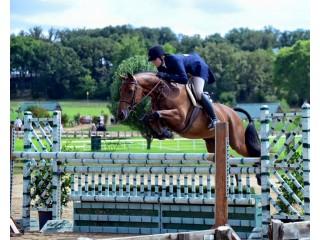 Jumper Horses for Sale in Texas, USA For Hunter Jumper Training   Comly Sport Horses