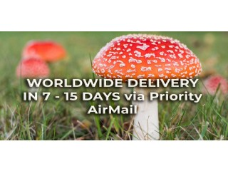 Amanita Muscaria - Dried Mushrooms Online Shop