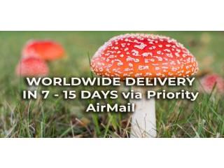 Amanita Muscaria - Dried Mushrooms Online Shop