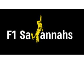 Savannah cats for sale