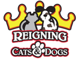 Reigning cats and dogs - the perfect pet boarding in ardmore